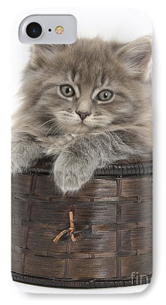 Maine Coon Kitten, Basket IPhone Case by Mark Taylor