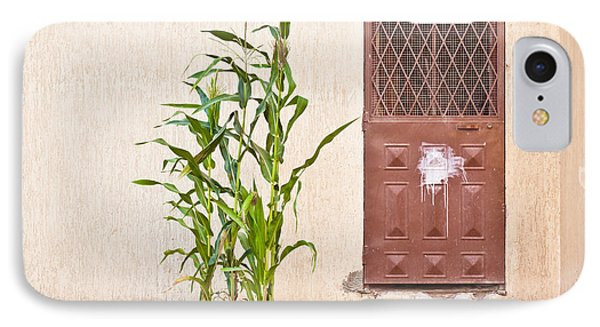 Maize Plant IPhone Case by Tom Gowanlock