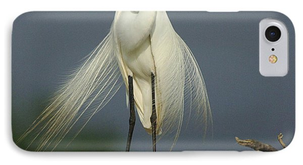 Majestic Great Egret IPhone Case by Bob Christopher
