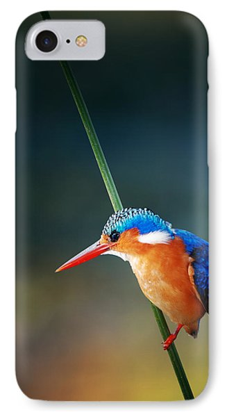 Malachite Kingfisher IPhone Case by Johan Swanepoel
