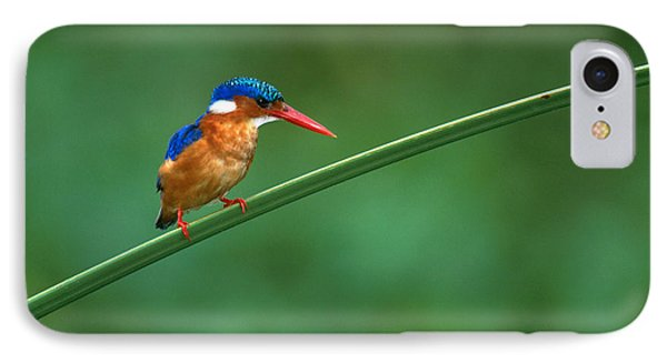 Malachite Kingfisher Tanzania Africa IPhone Case by Panoramic Images