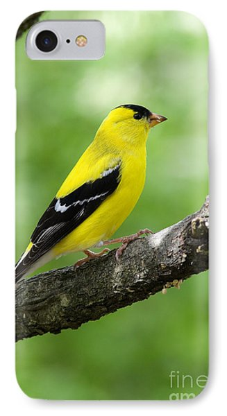 Male American Goldfinch IPhone Case by Thomas R Fletcher