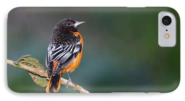 Male Baltimore Oriole, Icterus Galbula IPhone Case by Thomas Wiewandt