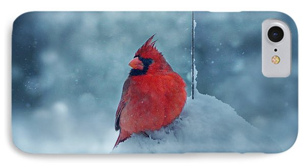 Male Cardinal In The Snow Phone Case by Sandy Keeton