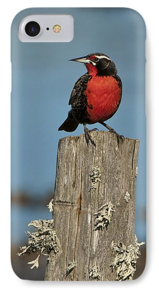 Male Long-tailed Meadowlark On Fencepost IPhone 7 Case by John Shaw