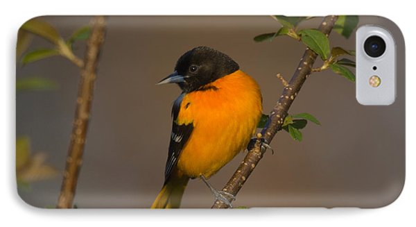 Male Northern Oriole IPhone 7 Case by Thomas and Pat Leeson