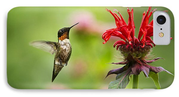 Male Ruby-throated Hummingbird Hovering Near Flowers IPhone Case by Christina Rollo