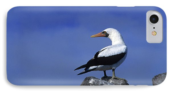 Masked Booby Bird IPhone Case by Thomas Wiewandt