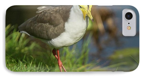 Masked Lapwing IPhone 7 Case by Bob Gibbons