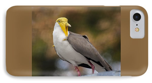 Masked Lapwing IPhone Case by Carolyn Marshall