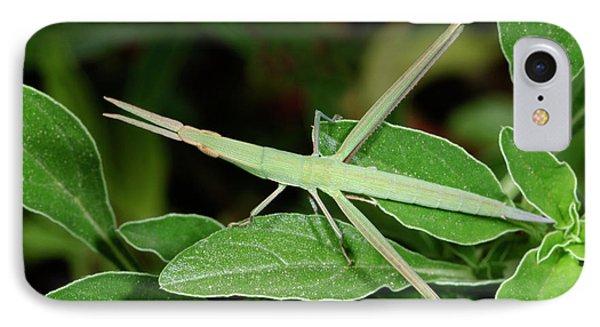 Mediterranean Slant-faced Grasshopper IPhone 7 Case by Nigel Downer