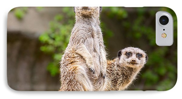 Meerkat Pair IPhone 7 Case by Jamie Pham