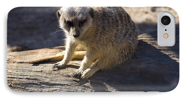 Meerkat Resting On A Rock IPhone 7 Case by Chris Flees