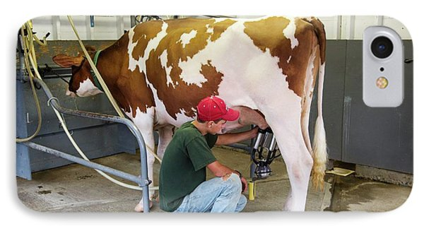 Milking A Cow IPhone Case by Jim West