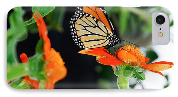 Monarch Butterfly On Orange Flower IPhone Case by Andee Design