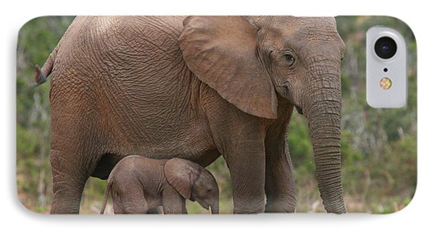 Mother And Calf IPhone Case by Bruce J Robinson