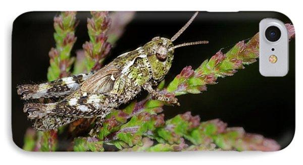 Mottled Grasshopper Juvenile IPhone 7 Case by Nigel Downer