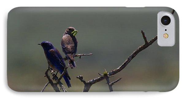 Mountain Bluebird Pair IPhone Case by Mike  Dawson