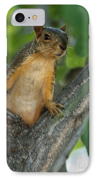 Mr.  Inquisitive  IPhone Case by Robert Bales