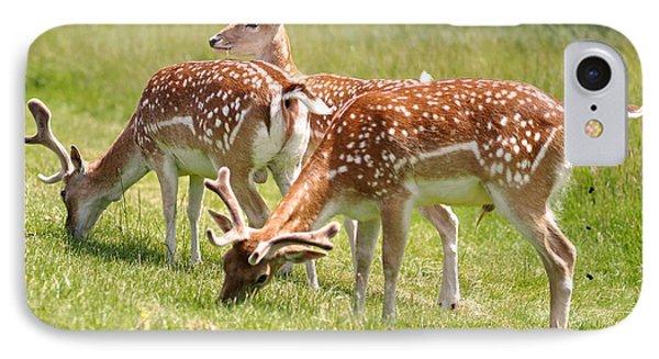 Multitasking Deer In Richmond Park IPhone Case by Rona Black