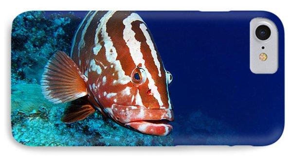Nassau Grouper IPhone Case by Carey Chen