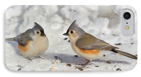 Nice Pair Of Titmice IPhone Case by John Absher