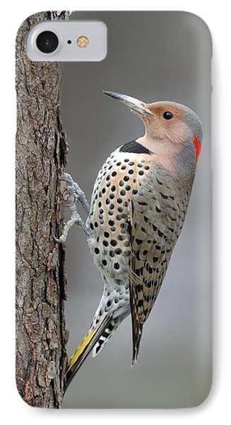 Northern Flicker Phone Case by Daniel Behm