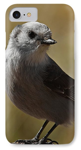 Northern Mockingbird IPhone Case by Ernie Echols