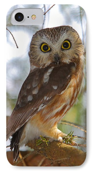 Northern Saw-whet Owl IPhone Case by Bruce J Robinson