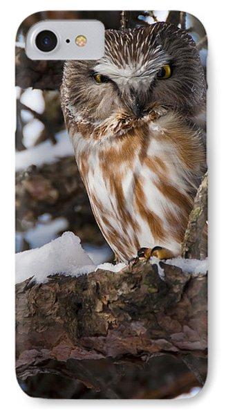 Northern Saw-whet Owl.. Phone Case by Nina Stavlund