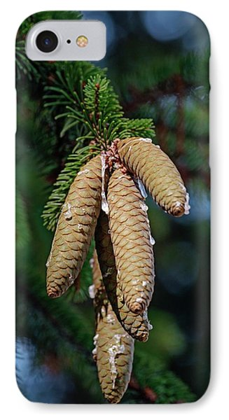 Norway Spruce (picea Abies) IPhone Case by Dr. Nick Kurzenko