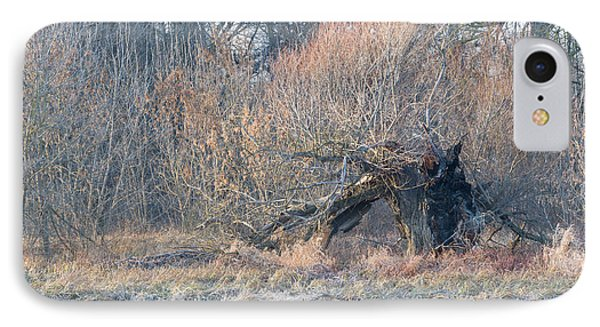 Old Burnt Willow In Winter IPhone Case by Ferenc Kosa