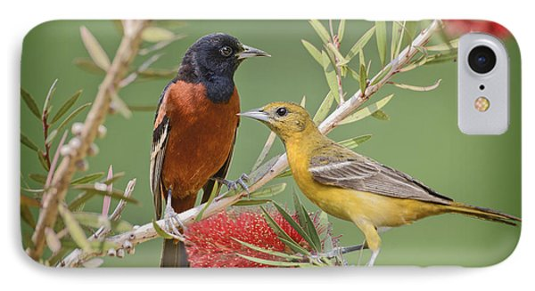 Orchard Oriole Pair IPhone Case by Bonnie Barry