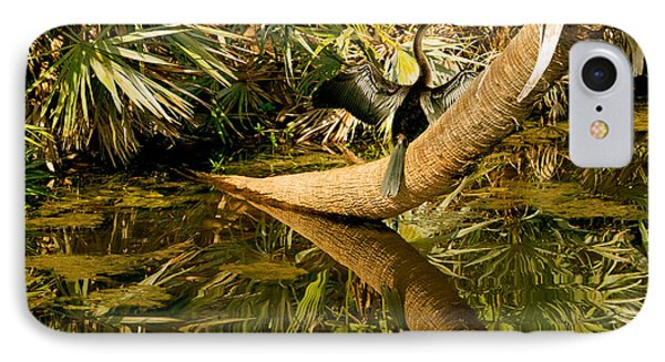 Oriental Darter Anhinga Melanogaster IPhone Case by Panoramic Images