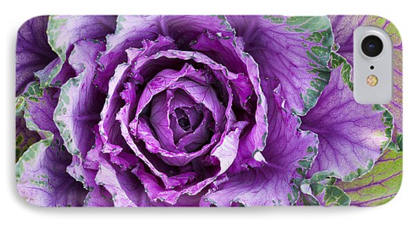 Ornamental Cabbage IPhone Case by Tim Gainey