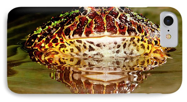 Ornate Horn Frog, Ceratophrys Ornata IPhone Case by David Northcott