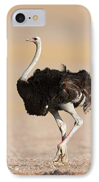 Ostrich IPhone Case by Johan Swanepoel