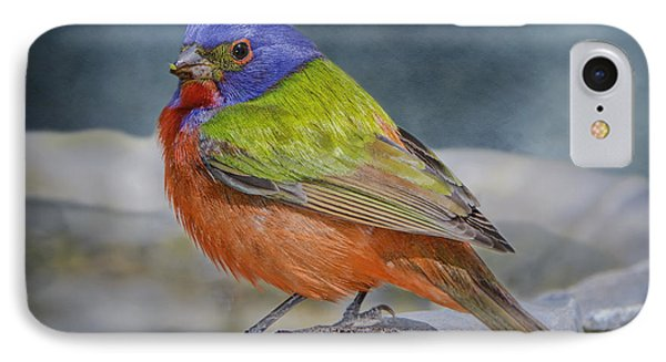Painted Bunting In April IPhone Case by Bonnie Barry
