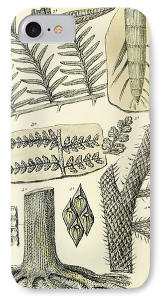 IPhone Case featuring the photograph Paleozoic Flora, Calamites, Illustration by British Library