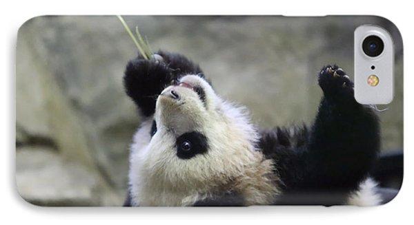 Panda Cub Phone Case by Jack Nevitt