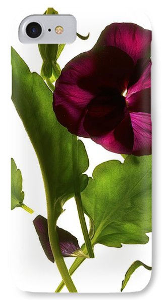 Pansy Purple IPhone Case by Julia McLemore