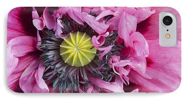 Papaver Somniferum Pink  Phone Case by Tim Gainey