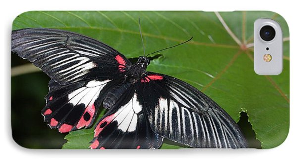 Papilio Memnon Butterfly IPhone Case by Dirk Wiersma