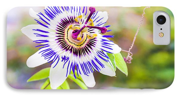 Passiflora Or Passion Flower Phone Case by Semmick Photo