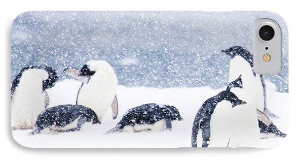 Penguins In The Snow IPhone Case by Carol Walker