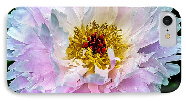 Peony Flower IPhone Case by Edward Fielding