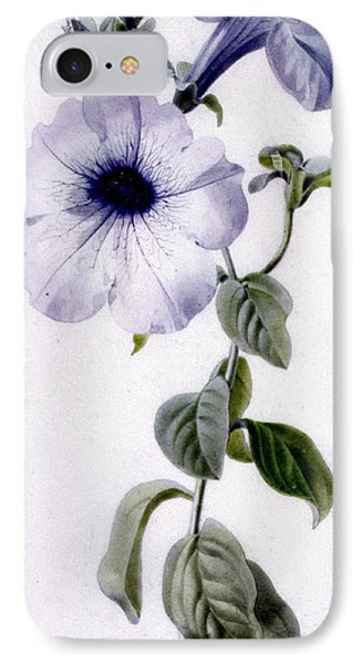 Petunia IPhone Case by Marie-Anne