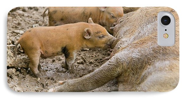 Pigs Reared For Pork On Tuvalu IPhone Case by Ashley Cooper
