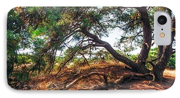 Pine Tree In Hoge Veluwe National Park 2. Netherlands Phone Case by Jenny Rainbow