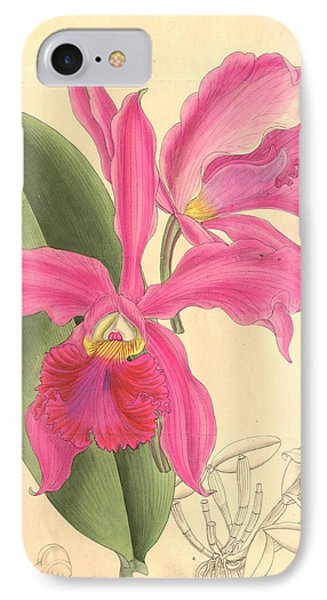 Pink Orchid IPhone Case by Philip Ralley